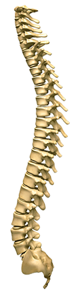 FAQ | The Spine | Chiropractor Services in Atlanta, GA